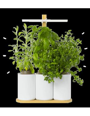 Brindemalice wishlist 2017 jardin d'intérieur pret à pousser